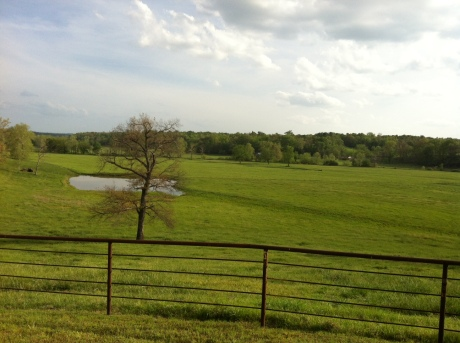 Rolling hills of the Oliver ranch